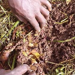 Worms-for-improving-soil-fertility